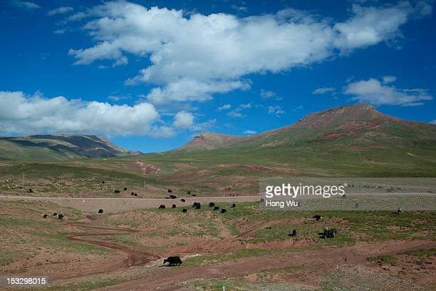Picture shows the scenes taken in a train carriage of from Beijing to Lhasa on August 15 2012 in Amdo China After QinghaiTibet Railway went into...