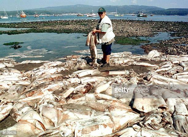 Picture taken 06 March 2004 in Tome province of Concepcion Chile of a fisherwoman holding a cuttlefish amidst several others washed ashore AFP...
