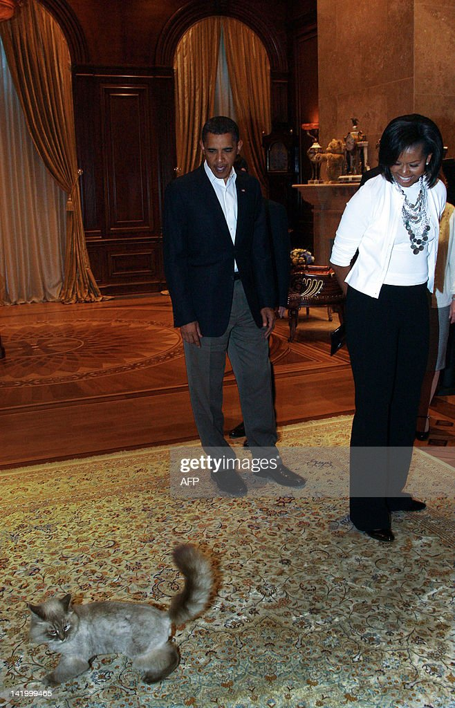 A picture taken July 6, 2009, shows US President Barack Obama (L) and his wife Michelle looking at Dorofey, a Neva Masquerade cat of Russia's President Dmitry Medvedev and his wife Svetlana, during a visit to Medvedev in this Gorki residence outside Moscow. Medvedev's beloved cat Dorofey mysteriously disappeared, Russian media reported today stirring media hype and hitting the Twitter world trends. After media buzz reached Dmitry Medvedev, he wrote on his Twitter that Dorofey is safely at home.