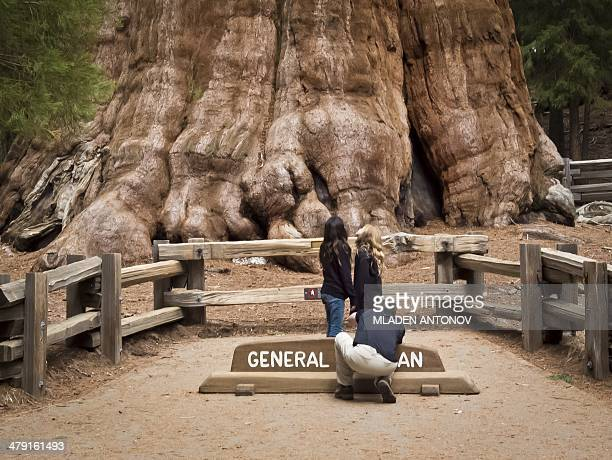 A picture taken March 09 2014 shows tourists posing for a photo next to the General Sherman Giant Sequoia at Sequoia National Park in California With...