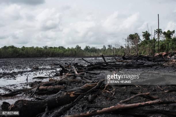 A picture taken on April 19 2017 shows polluted mangrove close to an illegal oil refinery storage tanks in the Niger Delta region near the city of...
