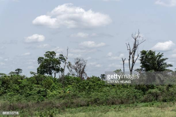 A picture taken on April 26 2017 shows a general view of the forest outside the Cross River National Park in Calabar on April 26 2017 The...