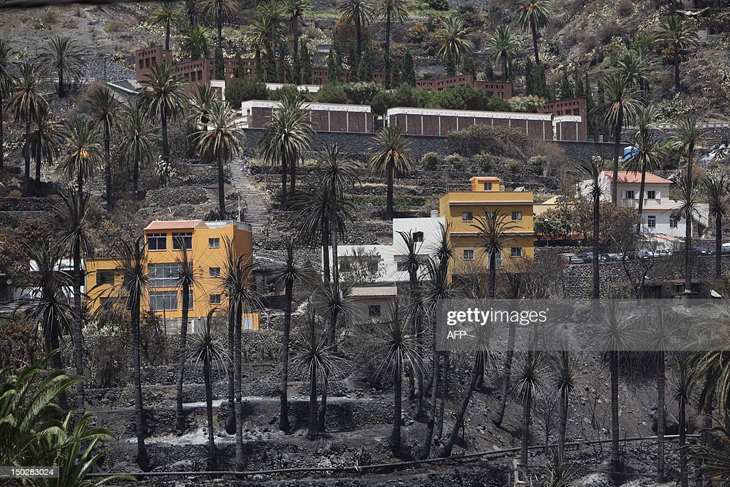 A picture taken on August 14, 2012 shows charred palm trees in Valle Gran Rey after wildfires devastated the Spanish Canary island of La Gomera. The blaze on the Atlantic island of La Gomera which broke out more than a week ago has forced 5,000 people to be evacuated and ravaged more than 4,000 hectares (10,000 acres) of land, including part of a rare nature reserve.
