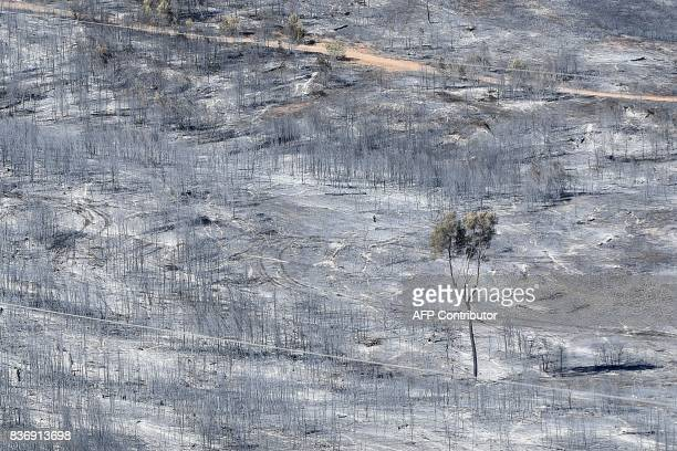 TOPSHOT A picture taken on August 22 2017 near CarnouxenProvence southeastern France shows a blackened and devastated area following a fire The fire...