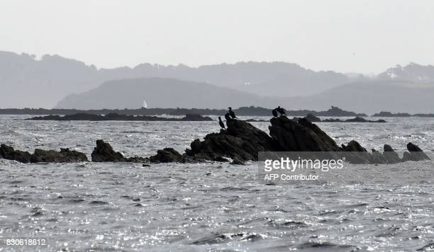 A picture taken on August 9 2017 in the island of Quemenes in Le Conquet western France shows birds on rocks A family rehabilated a breeding and...