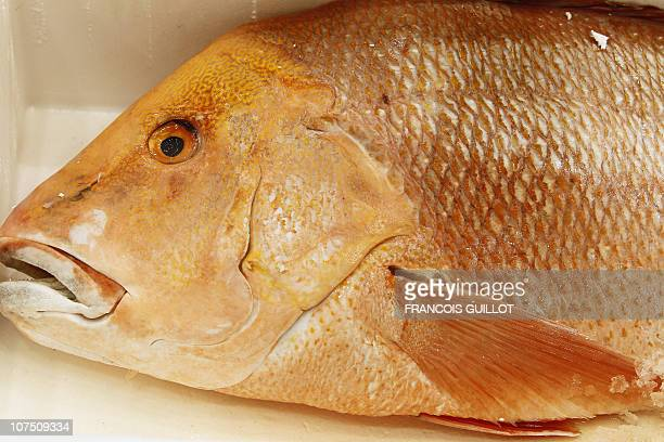 A picture taken on December 10 2010 shows a grouper displayed in the fresh fish pavilion at Rungis international food market near Paris Rungis...