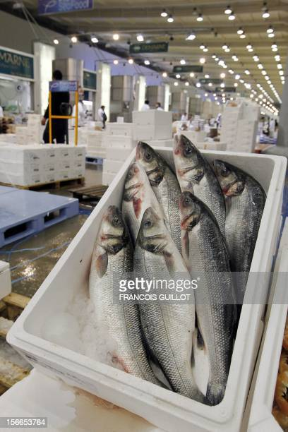 A picture taken on December 10 2010 shows Meagres displayed at the fresh fish pavilion at Rungis international food market near Paris Rungis...