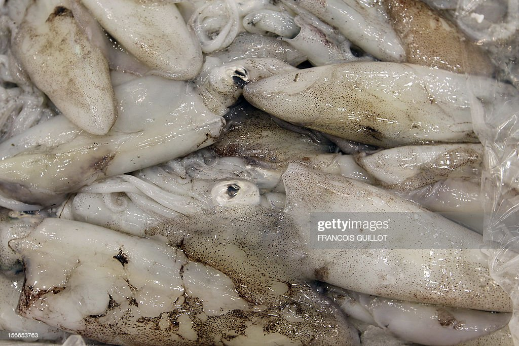 A picture taken on December 10 2010 shows squids displayed in the fresh fish pavilion at Rungis international food market near Paris Rungis...