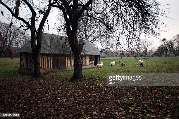 A picture taken on December 13 2013 shows a sheep barn in SaintJouin which is a 200 inhabitants town with the particularity to have the highest...