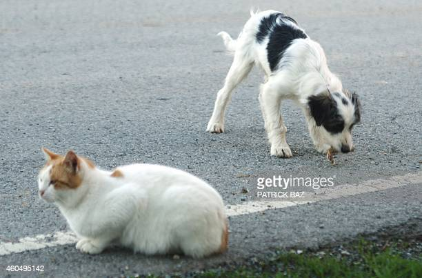 A picture taken on December 15 shows a dog eating food on the side of the road as a cat looks on near a salt lake in Larnaca The population of stray...