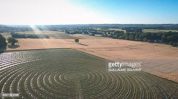 A picture taken on December 17 2016 at Chinon western France shows an aerial view of a truffiere of 4000 oak plants drawing an Archimede Spyral...