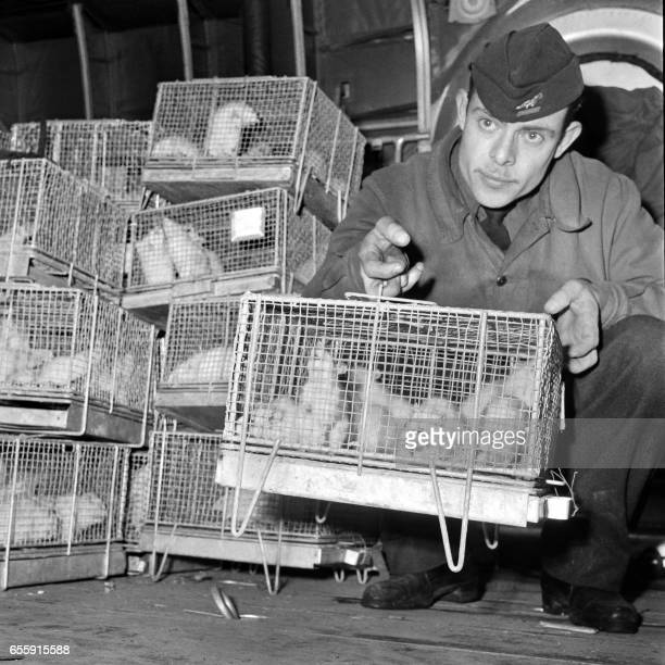 A picture taken on December 29 1960 at Le Bourget Paris airport show a soldier holding cages of guinea pigs arriving from Reggane southern Sahara...