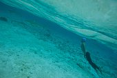 A picture taken on December 3 2015 shows a diver approching blacktip reef sharks in the lagoon of the island of Bora Bora Overexploitation threatens...