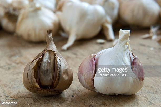 A picture taken on December 8 2016 in Billom central France shows black garlic obtained after cooking garlic using a wellpreserved secret recipe /...