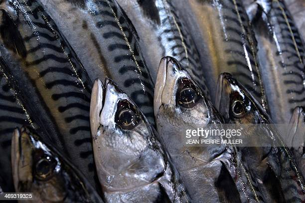 A picture taken on February 13 2014 in Bordeaux western France shows mackerels at a fish shop High tides and winter storms not only ravaged the coast...