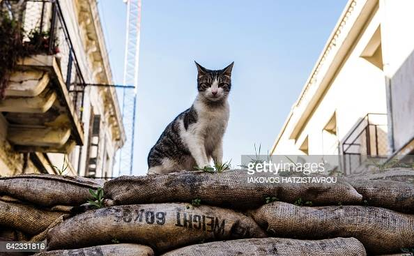 TOPSHOT A picture taken on February 17 2017 shows a feral cat sitting on a sandbag barricade acting as a boundary for the green line a UN controlled...