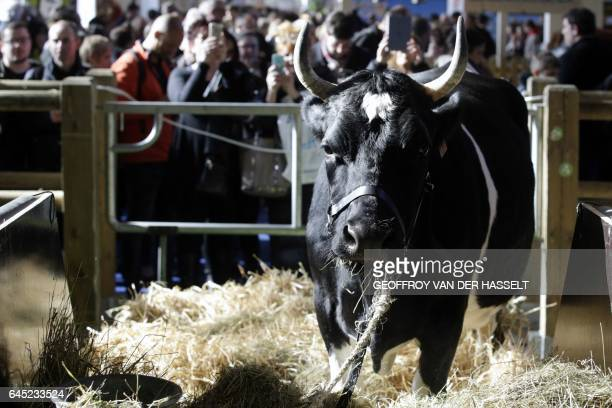 A picture taken on February 25 in Paris shows Fine the cow which is the 2017 mascot during the annual International Agriculture Fair / AFP / GEOFFROY...