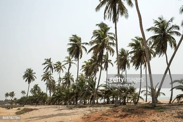 A picture taken on January 11 2017 shows palm trees on a beach outside the small coastal town of Ouidah some 40km from Cotonou With its beaches a...