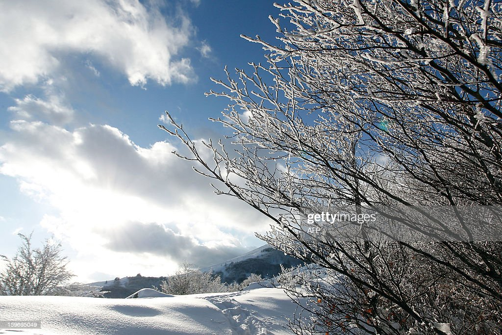 Picture taken on January 18, 2013, shows snow-covered trees at the Vizzavona mountain pass, close to Bocognano in the French Mediteranean Island of Corsica. AFP PHOTO / PASCAL POCHARD-CASABIANCA