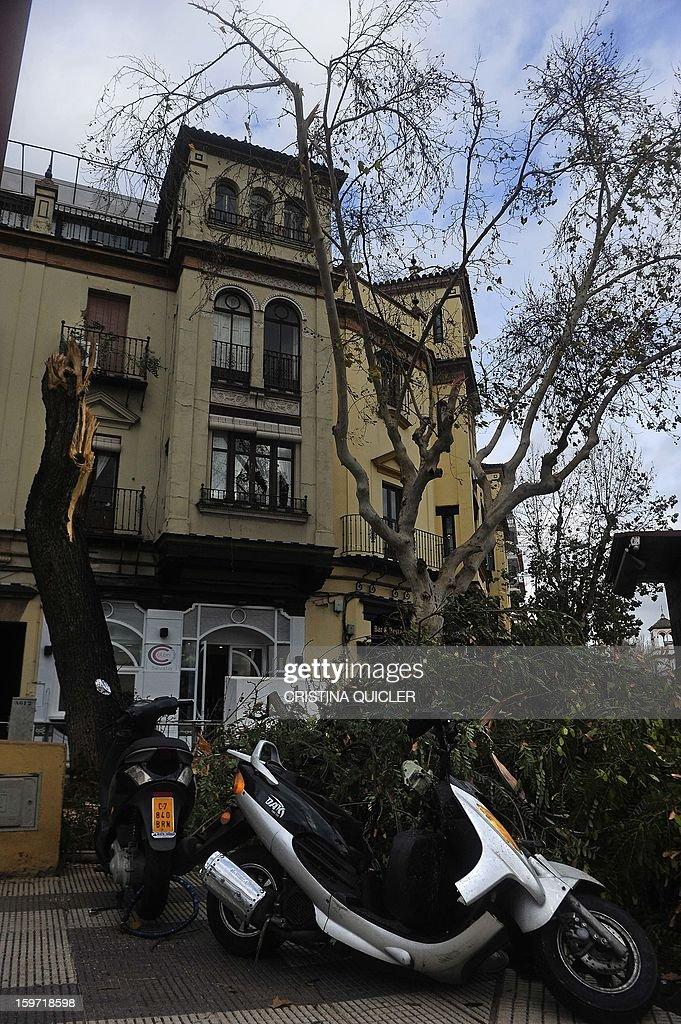 A picture taken on January 19, 2013 shows broken trees in the center of Sevilla after the city was hit by strong wind. The Spanish interior ministry issued an alert for the weekend, warning of snow and rain storms across the country with winds up to 100 kilometres per hour (62 mph) and rough seas in the Mediterranean.