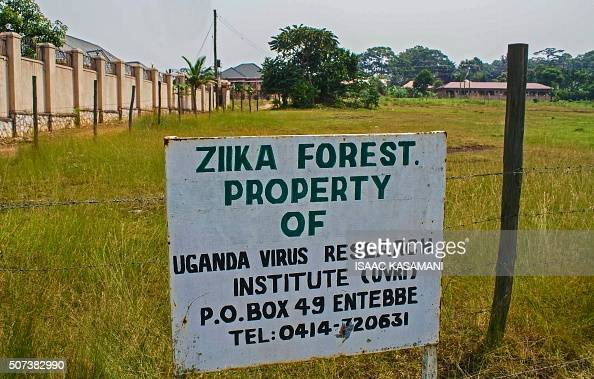 A picture taken on January 29 2016 shows a sign post in the Ziika forest in Uganda near Entebbe The Zika virus was first discovered in April 1947...