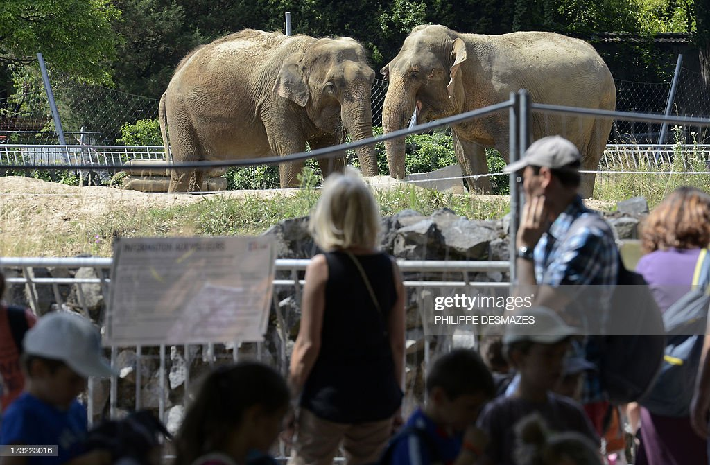 A picture taken on July 2, 2013 shows visitors looking at Baby and Nepal, two elephants suffering from tuberculosis, at the 'Parc de la Tête d'Or' Zoo in Lyon, central eastern France. The elephants will be transferred on July 11 to the Princess Stephanie of Monaco's property of Roc Agel in the southeast of France.