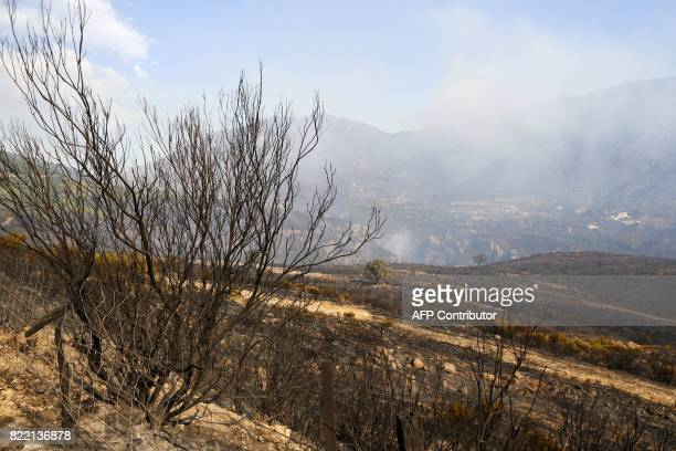 A picture taken on July 25 2017 shows the remains of the land burnt by a forest fire in Ortale de Biguglia near Biguglia on the French Mediterranean...