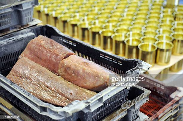 A picture taken on July 8 2013 shows tuna stored before canning at the Gonidec canning fish factory in Concarneau western of France Gonidec canning...