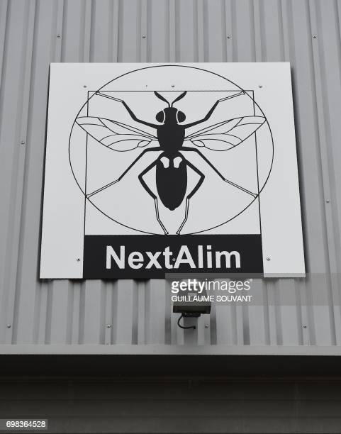 A picture taken on June 14 2017 shows a black soldier fly the logo of the NextAlim company at its headquarters in Poitiers NextAlim a French pioneer...