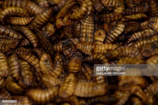 A picture taken on June 14 2017 shows dry 'cupules' of black soldier fly larvae after their development at the NextAlim company in Poitiers NextAlim...
