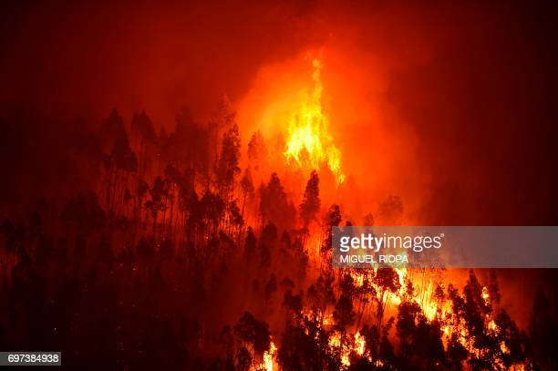 A picture taken on June 18 2017 shows a forest in flames during a wildfire near the village of Mega Fundeira Portugal declared three days of national...