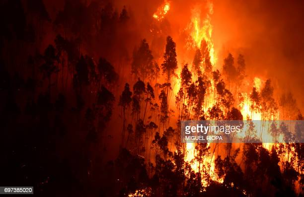 TOPSHOT A picture taken on June 18 2017 shows a forest in flames during a wildfire near the village of Mega Fundeira Portugal declared three days of...