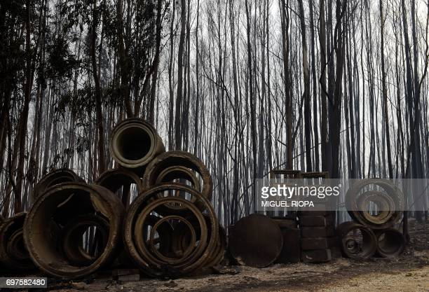 TOPSHOT A picture taken on June 19 2017 shows an area devastated by a wildfire close to the village of Figueiro dos Vinhos More than 1000...