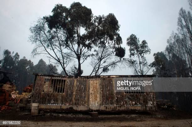 A picture taken on June 19 2017 shows wreckage of a shed in an area devastated by a wildfire close to the village of Figueiro dos Vinhos More than...