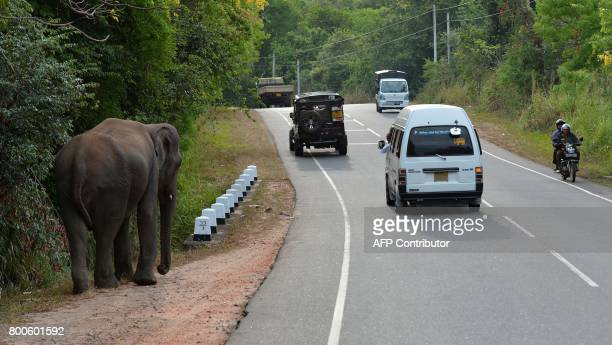 A picture taken on June 24 2017 in Minneriya National Park shows a Sri Lankan elephant walking along a road The Sri Lankan elephant is one of three...