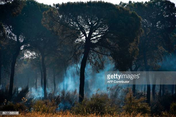 A picture taken on June 26 2017 shows smoke billowing in a burned forest in Mazagon after a wildfire near the Donana National Park More than 1500...