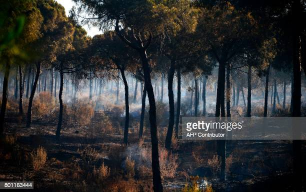 A picture taken on June 26 2017 shows smoke billowing in a charred forest after a wildfire in Mazagon near the Donana National Park More than 1500...