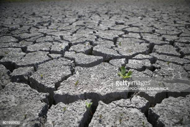 TOPSHOT Picture taken on June 27 2017 shows a dry field on in Bastelicaccia few kilometers from Ajaccio on the French Mediterranean island of Corsica...