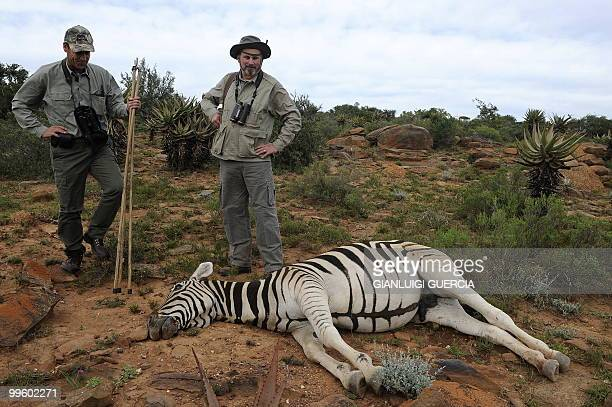 A picture taken on May 13 2010 shows Philip Dixie a professional hunter from Blaauwkrantz hunting reserve and his client looking at a dead zebra...