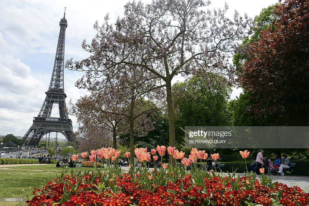 A picture taken on May 9, 2013 in Paris shows tulips and primroses in front of the Eiffel Tower.