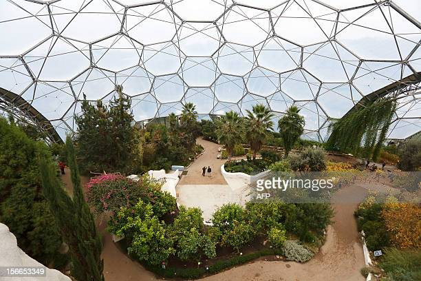 A picture taken on November 12 2012 shows a general view of the inside of the Mediterranean Biome at the Eden Project in St Austell Cornwall...