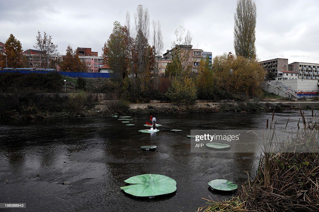 Picture taken on November 14, 2012 shows a bridge made of water lilies accross the Ibar river in the ethnically divided flashpoint town of Mitrovica in protest at the real bridge being blocked. The actual bridge linking the Albanian-populated south with the Serb-populated north of Mitrovica is closed off by a huge cement barricade, preventing any interaction between the two sides. Mitrovica in particular often the scene of violent clashes as local Serbs refuses to recognise the ethnic Albanian government in Pristina. AFP PHOTO/ARMEND NIMANI
