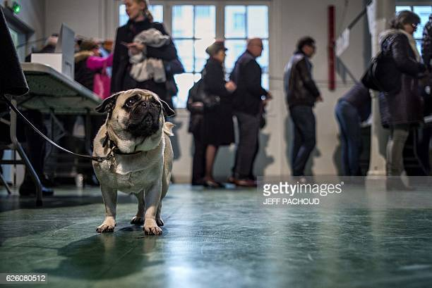 TOPSHOT A picture taken on November 27 2016 shows a dog at a polling station in Lyon as people queue to vote during the second round of the...