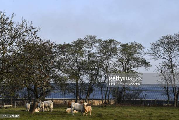 A picture taken on November 7 2017 shows one of a building of the named '4000 Bovins' farm a livestock farming project in Digoin In the upcoming days...