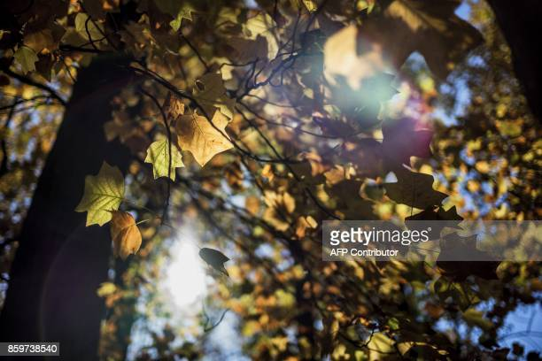A picture taken on October 10 2017 shows leaves at the Parc de la Tete d'Or on October 10 2017 in Lyon / AFP PHOTO / JEFF PACHOUD