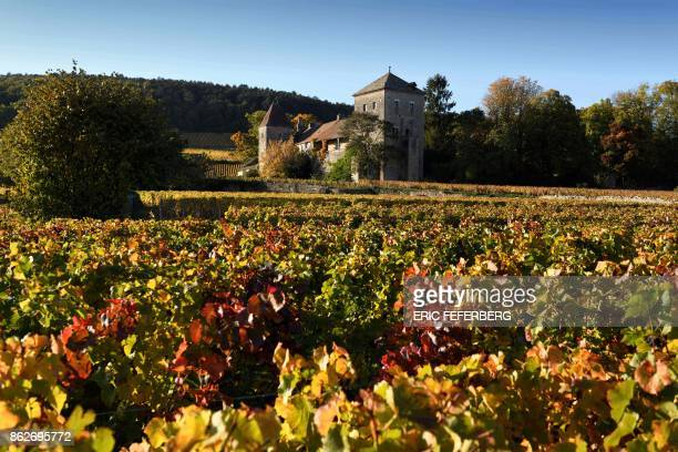 A picture taken on October 13 2017 shows the chateau of GevreyChambertin and its nearby vineyard part of the grape variety of Burgundy / AFP PHOTO /...