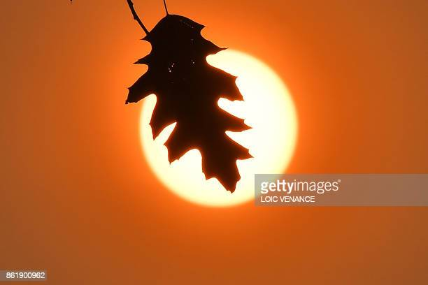 A picture taken on October 16 2017 in Le Gavre western France shows an oak leaf silhouetted by the Autum sun / AFP PHOTO / LOIC VENANCE