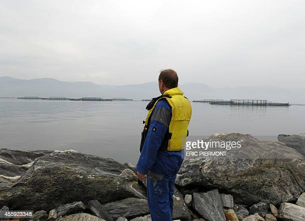 A picture taken on September 11 2014 in Indre Oppedal 100 km from Bergen shows a man looking at submerged salmons cages at a farm of Norwegian...