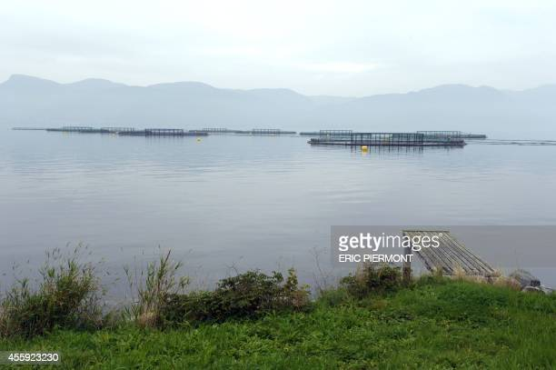 A picture taken on September 11 2014 in Indre Oppedal 100 km from Bergen shows submerged salmons cages at a farm of Norwegian world's largest salmon...
