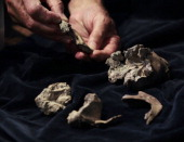 A picture taken on September 19 2011 at the Gallery of Paleontology of the National Museum of Natural History in Paris shows a fossilized bone of an...